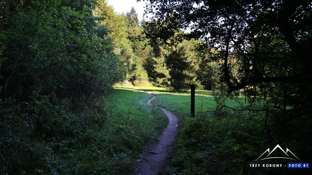 Wyjście na łąkę przed przełęczą Szopka