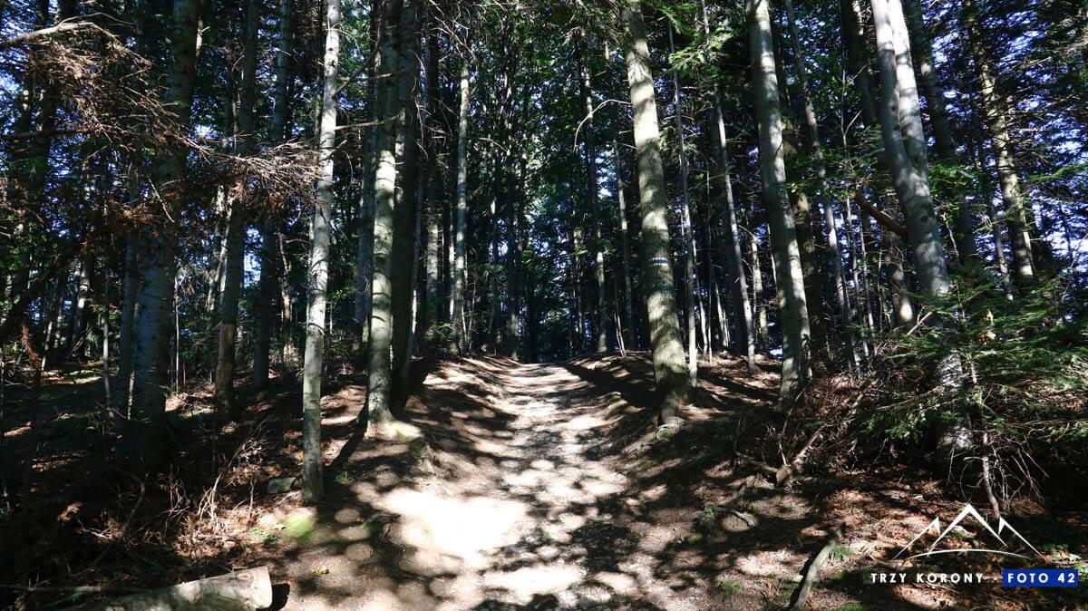 Las do przełęczy Szopka